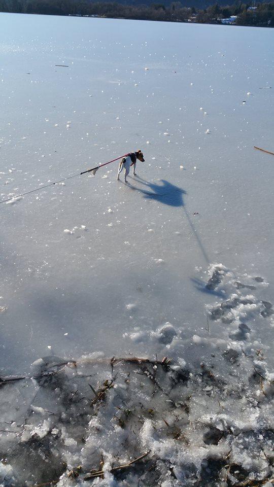 cane su lago ghiacciato